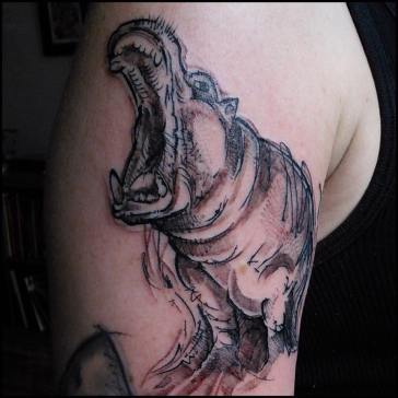 meg-hippo